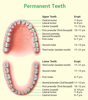 magic dental care Permanent-Teeth