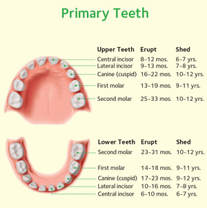 magic dental care Primary-Teeth